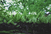 Little Fern In The Forest