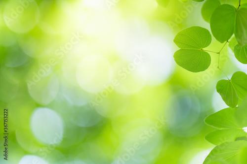 Fototapeta Nature of green leaf in garden using as background natural wallpaper obraz