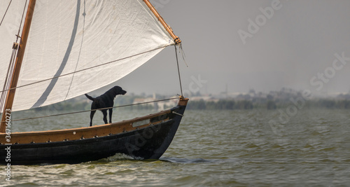 Fotomural black dog sailing on prow of a ship, traditional wooden boats