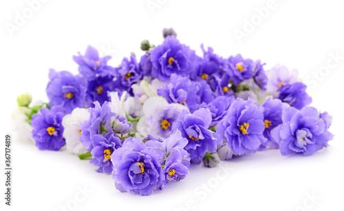 Fotografering Violets beautiful flowers, background.