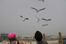 Feeding Gulls On The Beach