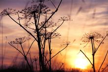 Beautiful Calm Sunset..Silhoue...
