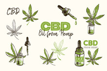 Cbd Oil Logo, Green Droplet, Hemp Oil Drop, Medical Marijuana, Outline Black Green Cannabis Leaves. Hand Drawn Natural Vintage Sketch For Medical Design. Vector Illustration On White Background