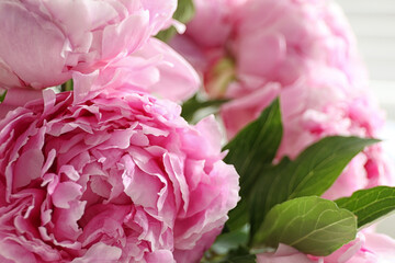 Fototapeta Peonie Closeup view of beautiful fresh pink peonies