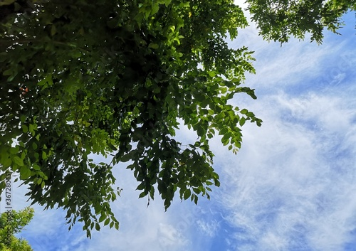 Photo Green leaves tree blue sky with white clouds nature background appropriate