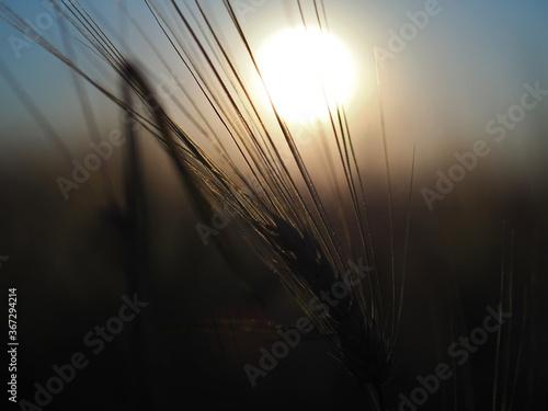 Kraft der Sonne im Korn Canvas-taulu