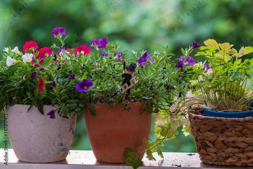 Fototapeta Colorful calibrachoa s in pots obraz na płótnie