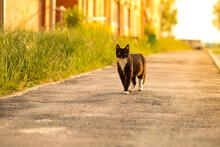 Cat Walking On A Street. A Str...