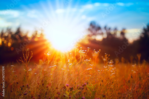 Canvastavla Orange sunset in a wild field, blurred blue sky with yellow sunlight passing thr