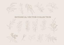 Botanical Garden. Vector Colle...