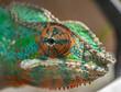 Chameleon eye colour