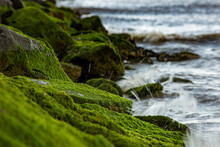 Moss Covered Rock Jetty Atlant...