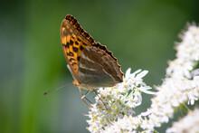 Beautiful Summer Butterflies O...