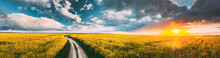 Elevated View Of Sunshine During Sunset Above Rural Landscape With Blooming Canola Colza Flowers. Sun Shining In Dramatic Sky At Sunrise Above Spring Agricultural Rapeseed Field And Country Road