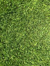 Texture De Gazon Mélange Herb...