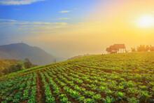 Vegetable Garden Gold By Morni...