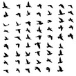 Black vector flying birds flock silhouettes isolated on white background. symbol tattoo design graphic.