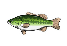 Largemouth Bass Fish, Hand Dra...