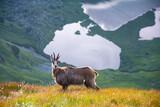 Tatry Krajobraz i Zwierzęta