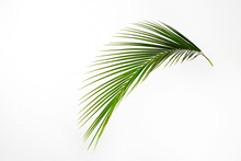 Big Green Palm Leaf Over Brigh...