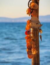 Ornamental Shells Hanging On A...
