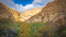 Beautiful Landscape Of Ein Bokek, A Canyon-like Gorge Near The Dead Sea, With Water Springs And Unique Fauna And Flora, Surrounded By Sandstone Cliffs Of Judean Desert Mountains