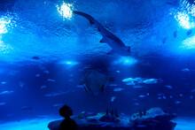 Boy Watching Shark, Fish And T...