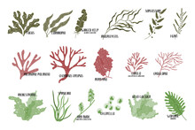 Big Set Of Edible Seaweeds. Br...