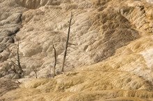 Terraces At Mammoth Hot Springs;  Yellowstone NP;  Wyoming