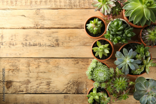 Fotografía Many different echeverias on wooden table, flat lay with space for text
