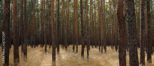 Wald, Baumbestand Canvas-taulu