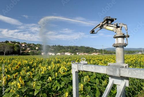 Photo Arrosage automatique champ de tournesol, canon  à eau