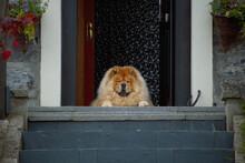 A Guard Dog Sleeping Relaxed O...