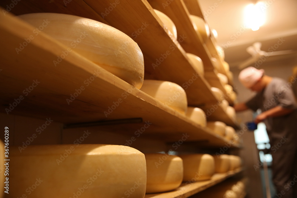 Fototapeta Fresh cheese heads in factory warehouse and blurred worker on background