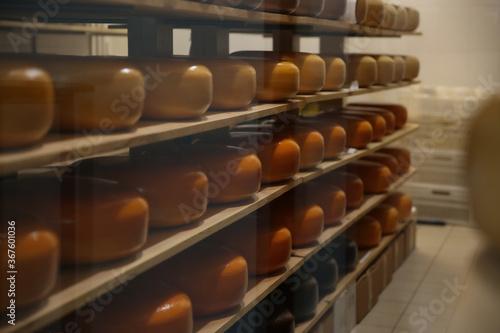 Obraz Fresh cheese heads on rack in factory warehouse - fototapety do salonu