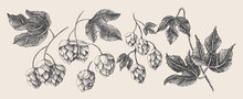 Hand-drawn Set Of Branches, Co...
