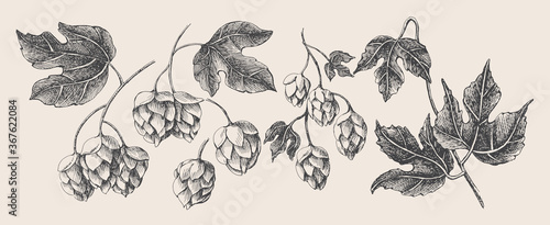 Fotomural Hand-drawn set of branches, cones, hop leaves on a light isolated background