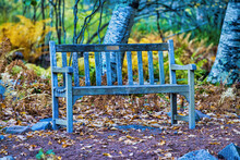 Beautiful Bench In The Woods, ...