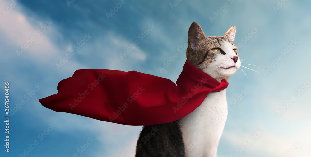 cute super hero cat with his red cape watching the horizon - blue sky background