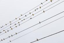 Birds On Light Wire With Sky B...