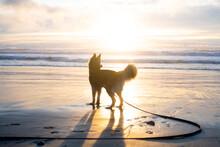 Dog On A Beach At Sunset