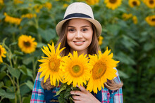 Young, Adorable, Female Farmer Holding Many Beautiful Sunflowers In The Middle Of A Green And Golden Sunflower Field.