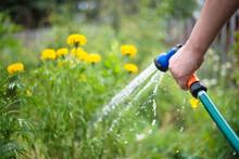Gardener Is Watering A Garden ...