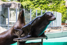 Sea Lions At The Budapest Zoo....