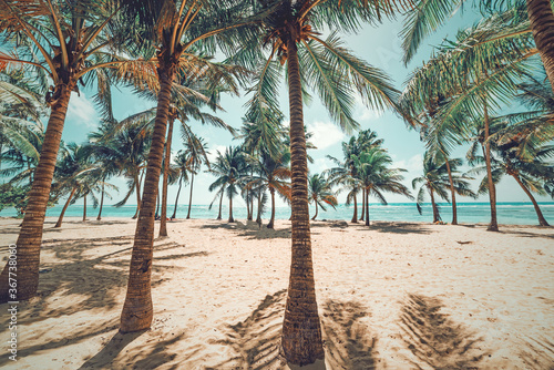 Palm trees and white sand in Bois Jolan beach
