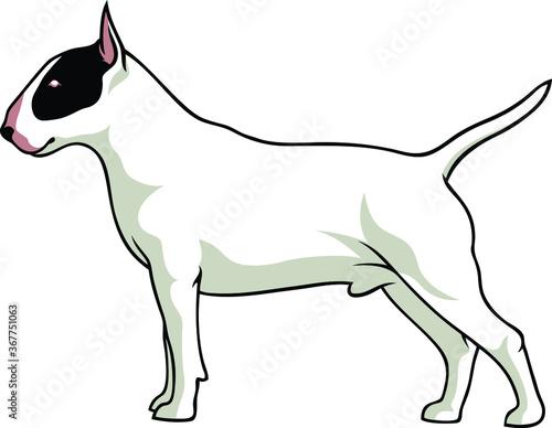Tela Simple Vector of English Bull Terrier Dog