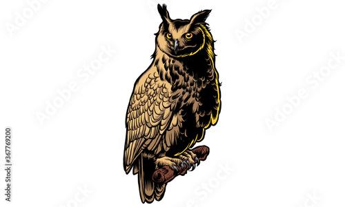 owl Fototapeta