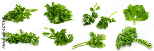 Fototapeta Greenery. Sprigs of parsley on a white background. Several photos from different angles. Macro photo. High quality photo obraz