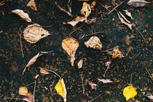 Yellow Leaves On An Asphalt Bl...