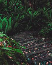 Rainforest Stairs